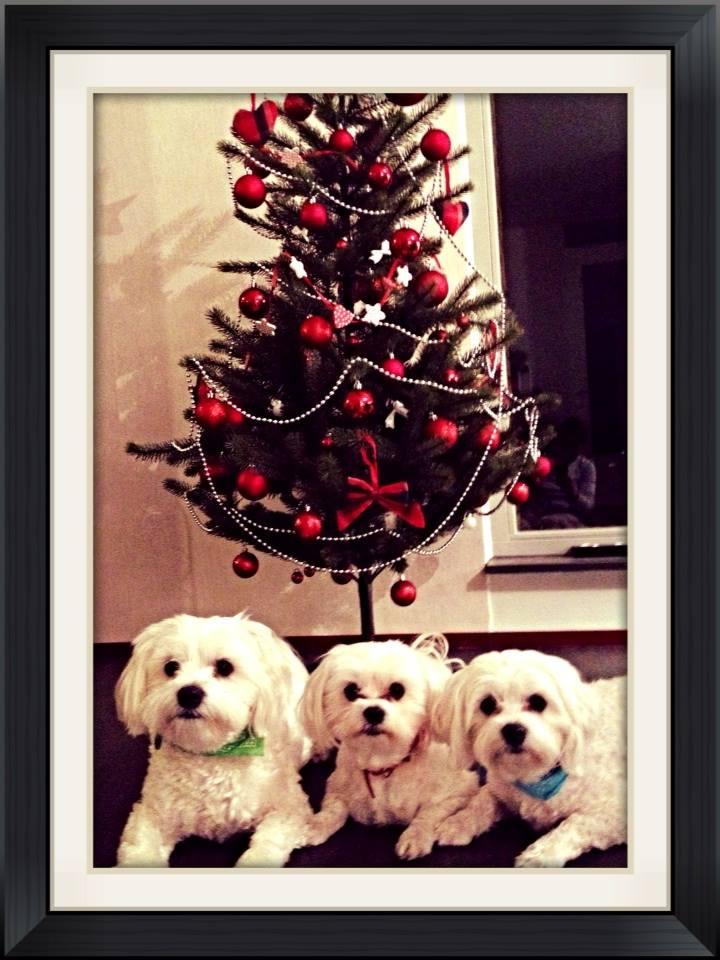 A Família Forsight deseja-vos um excelente Natal!